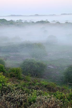 Lagen mist tussen struweel en duinen tijdens zonsopkomst in het Noordhollands Duinreservaat bij Heemskerk.