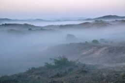 Lagen mist tussen de duinen tijdens zonsopkomst in de vroege ochtend in het Noordhollands Duinreservaat bij Bakkum - © Ronald van Wijk Natuurfotografie