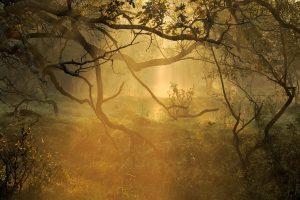 Zonnestralen zoeken hun weg door takken in mistig bos tijdens zonsopkomst in de Amsterdamse Waterleidingduinen bij Vogelenzang