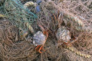 Krabben gevangen in een aangespoeld visnet na een storm op het strand van Wijk aan Zee.
