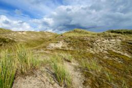 Kale duinhellingen met zand, grassen en mossen in de Noordduinen bij Julianadorp aan Zee - © Ronald van Wijk Natuurfotografie