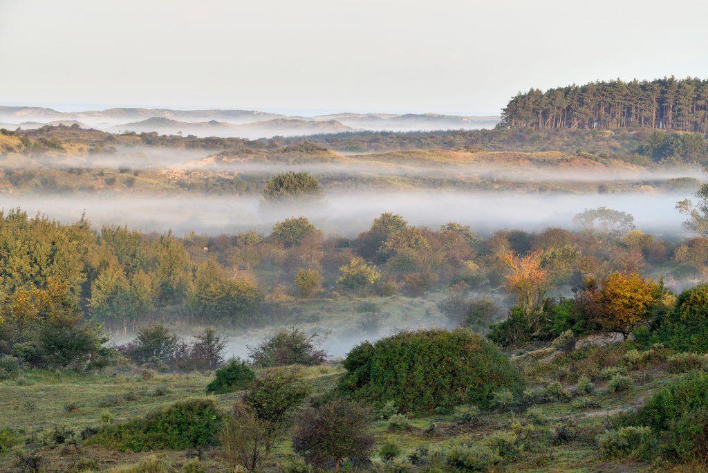 Uitzicht over duinlandschap met lagen mist tussen duinhellingen tijdens zonsopkomst in het Nationaal Park Zuid-Kennemerland bij Bloemendaal