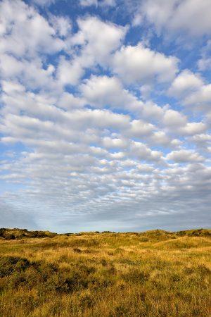 Waaier van schapenwolken boven de duinen van het Noordhollands Duinreservaat bij Wijk aan Zee.