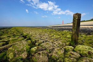 Met wieren en zeepokken bedekte keien en stenen op strekdam tijdens laagwater aan voet van de Helderse Zeewering bij Huisduinen