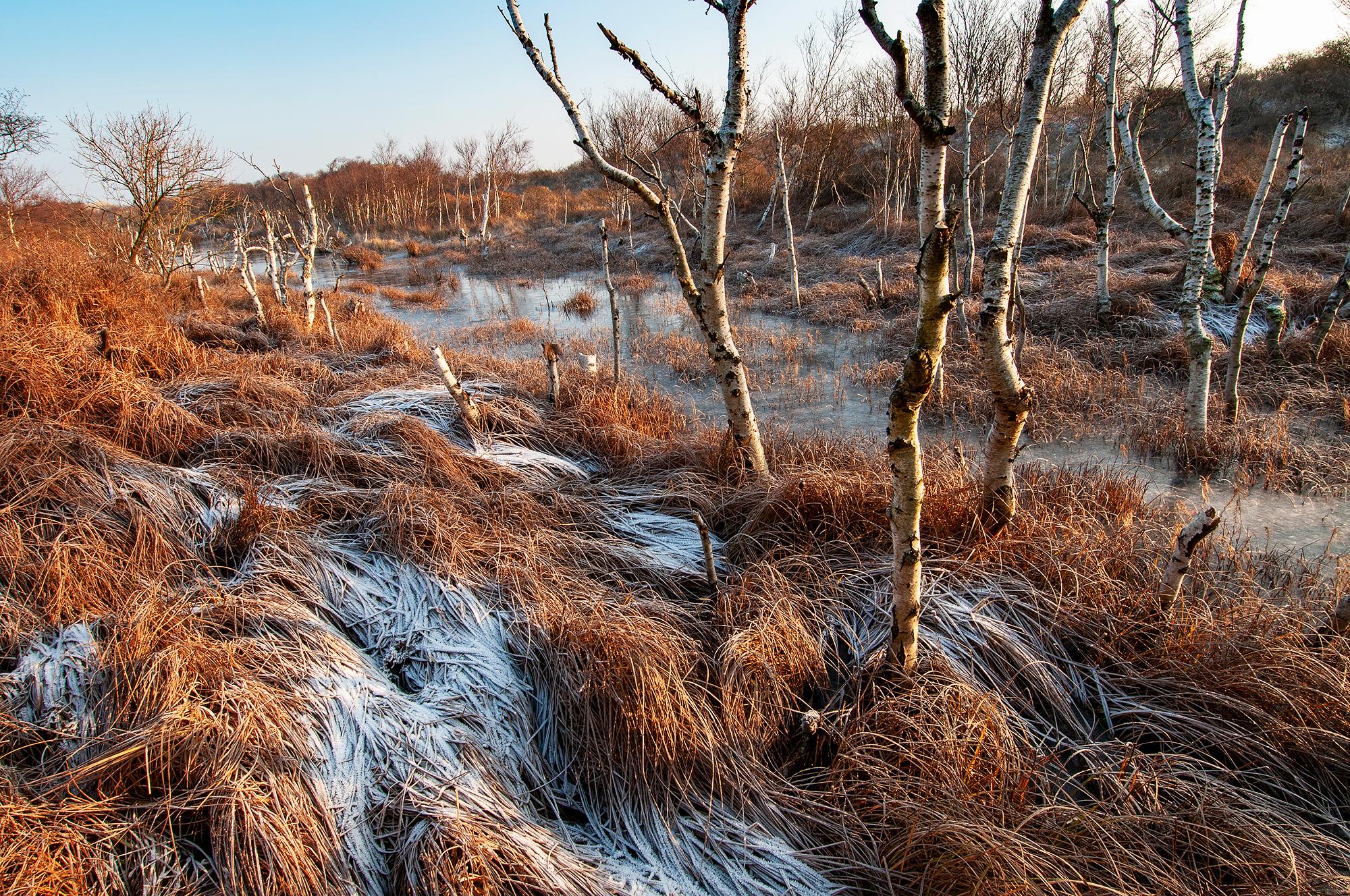 Met rijp bedekte oever van infiltratiekanaal tijdens winter in het Noordhollands Duinreservaat bij Heemskerk