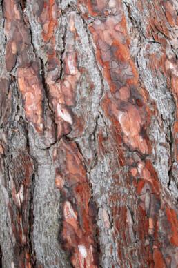 Structuren en kleuren in boomschors van grove den (Pinus sylvestris) in het Nationaal Park Zuid-Kennemerland bij IJmuiden