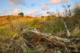 Warm licht schijnt over het gras van de duinen tijdens een mooie zonsopkomst op het Waddeneiland Vlieland.