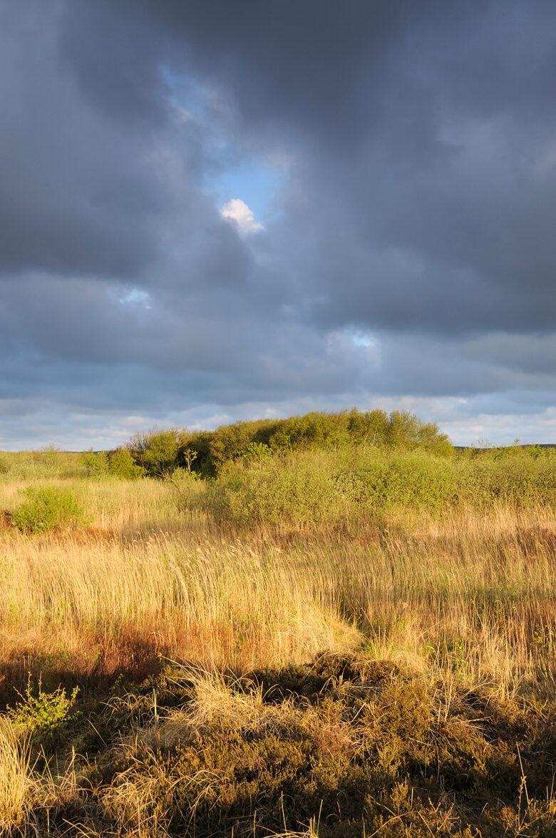 Donkere wolkenlucht boven duinmoeras met riet en wilgen in de duinen van het Zwanenwater bij Callantsoog