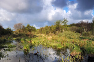 Hollandse wolkenlucht boven het water en verse lentegroen van het duinmoeras in het Zwanenwater bij Callantsoog.
