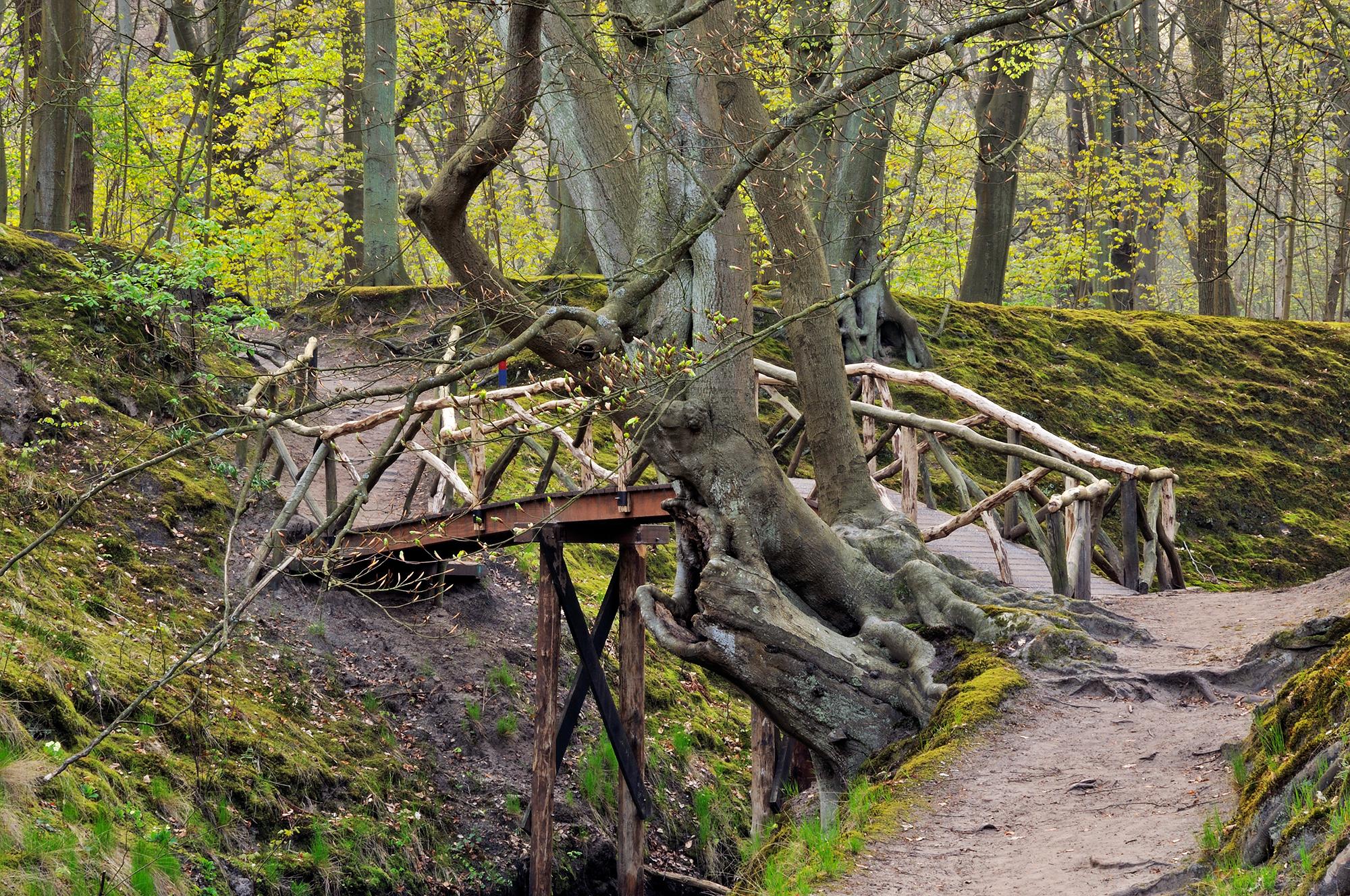 Wandelbrug over het water tussen de moshellingen tijdens lente op Landgoed Elswout in Overveen