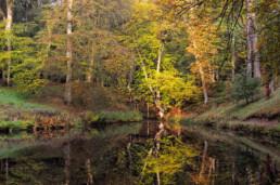 Weerspiegeling van kleuren herfstbos in het water van eenvijver op Landgoed Elswout in Overveen