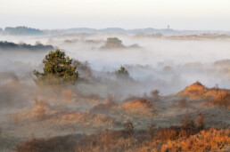 Zonsopkomst tijdens koude ochtend met laagjes mist tussen de duinhellingen in Nationaal Park Zuid-Kennemerland bij Overveen.