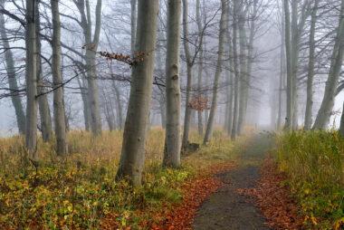 Contouren van boomstammen langs wandelpad in dichte mist op Landgoed Marquette in Heemskerk.