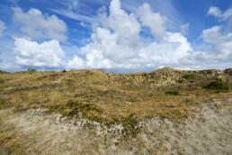 Kalen, open duinhellingen met grassen, zand en mossen in de Schoorlse Duinen bij Hargen aan Zee.