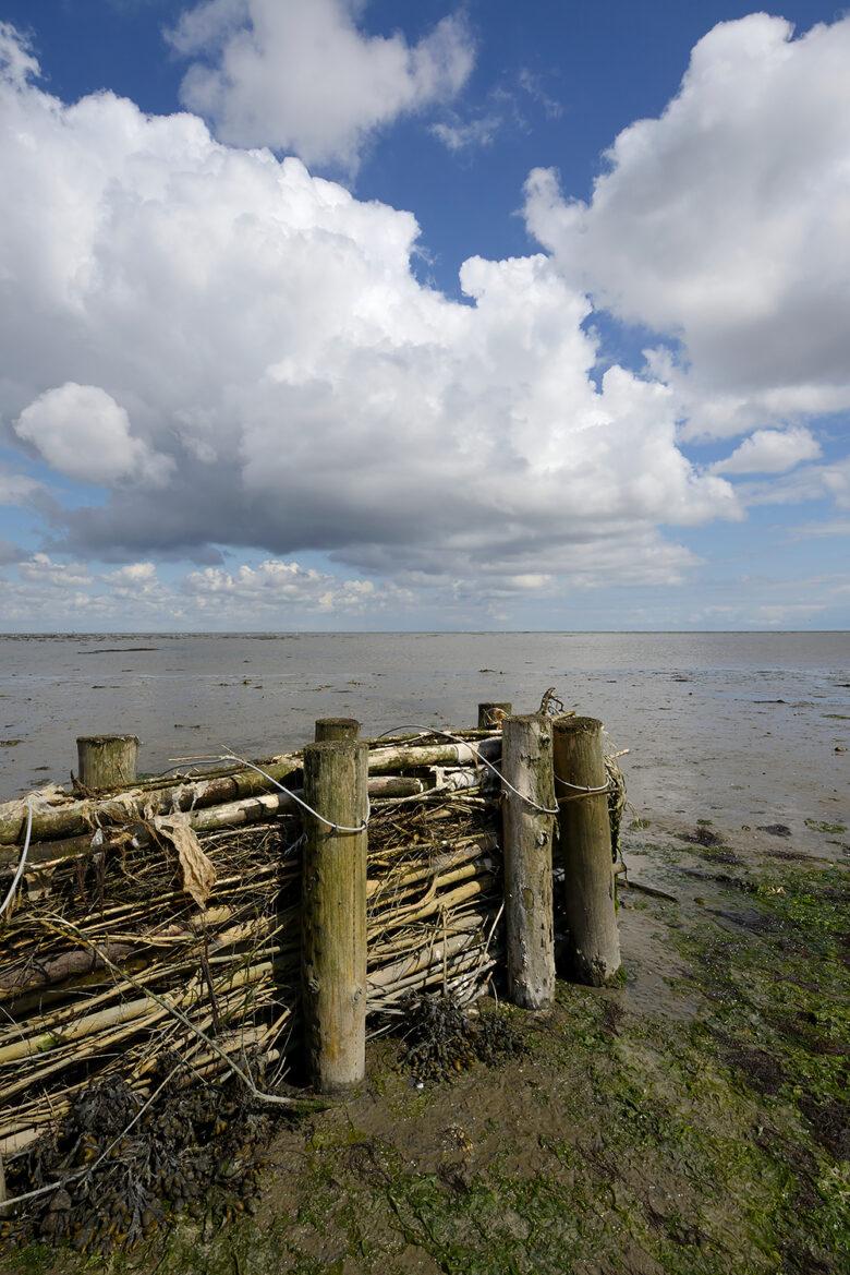 Een rijshouten dam beschermt kwelder tegen afslag tijdens laagwater op het Balgzand bij Den Helder