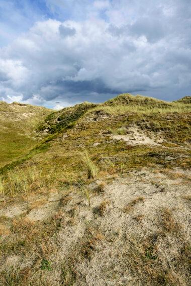 Kaal, open landschap van grijze duinen met zand, grassen en mossen in de Noordduinen bij Julianadorp aan Zee