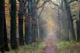 Zonnestralen schijnen door de takken van bomenlaan tijdens herfst op Buitenplaats Leyduin in Heemstede