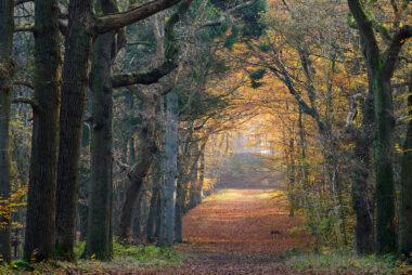 Zicht op uitkijkpunt Belvedere door bomenlaan met geel en oranje herfstblad op Buitenplaats Leyduin in Heemstede