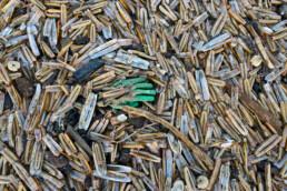 Aangespoelde, groene werkhandschoen tussen een grote berg schelpen van Amerikaanse zwaardschede na storm op het strand van Wijk aan Zee.