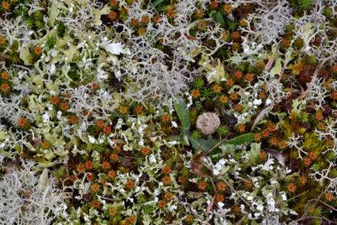 Verzameling van verschillende soorten (korst)mossen op het zand van de duinen in het Zwanenwater bij Callantsoog