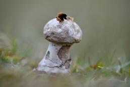 Opengescheurde bovenzijde van oude stuifzwam in de duinen van het Nationaal Park Duinen van Texel bij Den Hoorn.