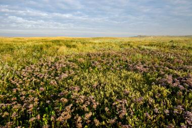 Warm licht schijnt over planten in kwelderlandschap tijdens zonsopkomst in de slufter van het Nationaal Park Duinen van Texel