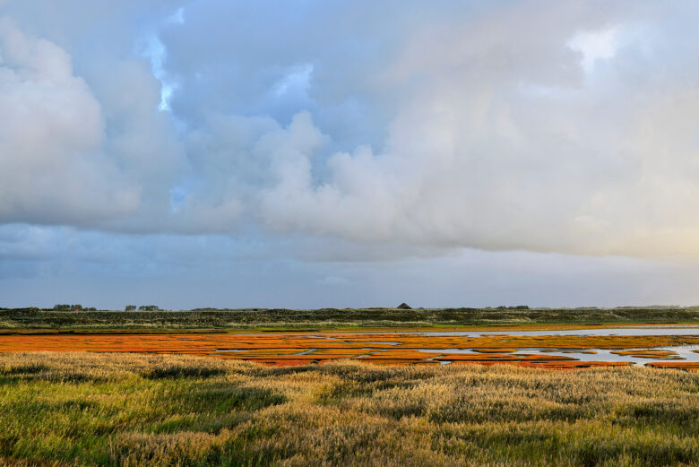 Herfstkleuren van rood verkleurd zeekraal op de kwelders van de Mokbaai op het Waddeneiland Texel.
