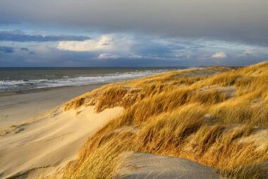 Warm licht van zonsondergang schijnt over zand en wuivend helmgras van de duinen op het strand van Petten