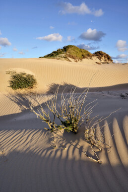 Avondlicht schijnt over de zanderige duinhellingen van de Noordwest Natuurkern in het Nationaal Park Zuid-Kennemerland