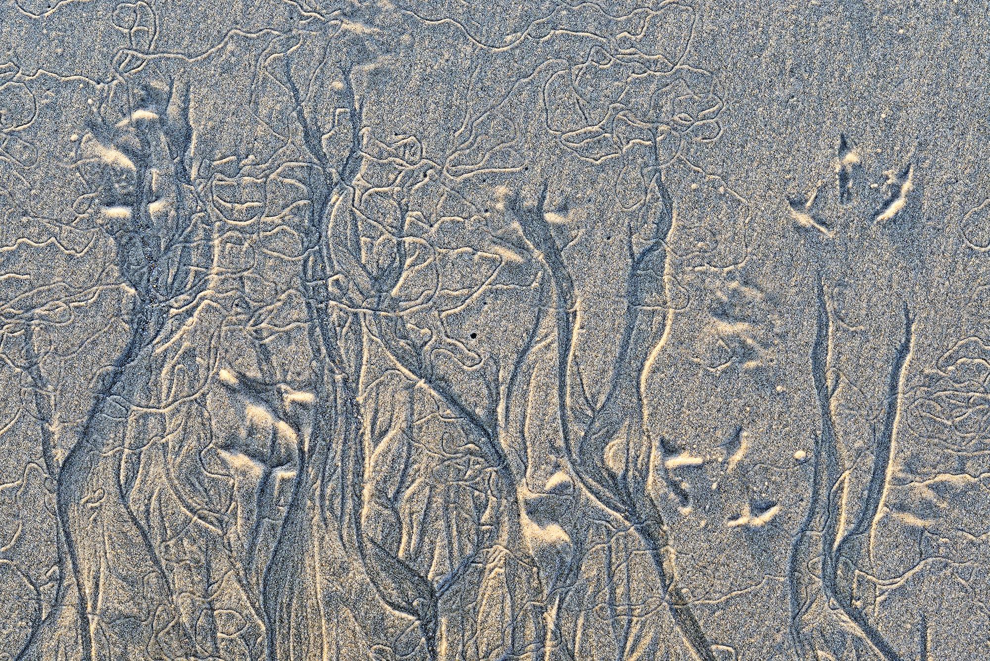 Pootafdrukken van vogel en slingerende zandpatronen langs de vloedlijn tijdens laagwater op het strand van Hargen aan Zee