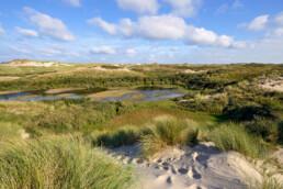 Uitzicht vanaf duinhelling over natte valleien in het Noordhollands Duinreservaat bij Egmond aan Zee.