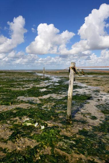 Met palen en touw afgezet vogelreservaat op drooggevallen slik tijdens laagwater op De Volharding op waddeneiland Texel.