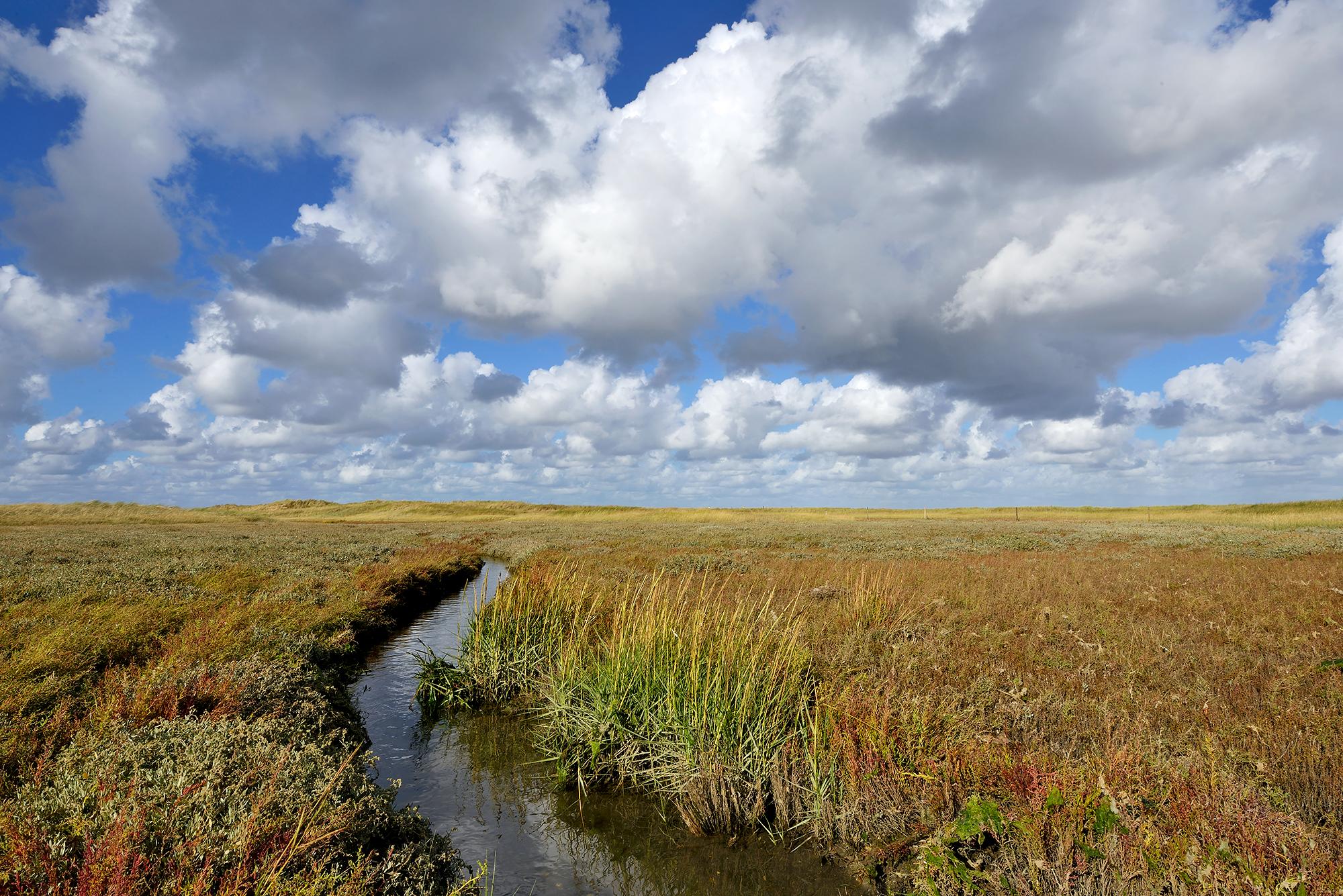 Slingerende kreek door de kwelder van vogelreservaat De Volharding bij De Cocksdorp op het waddeneiland Texel.