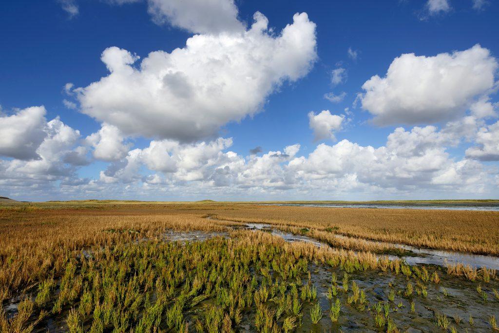 Verkleurde planten aan het einde van de zomer op de kwelder van vogelreservaat De Volharding bij De Cocksdorp op het waddeneiland Texel