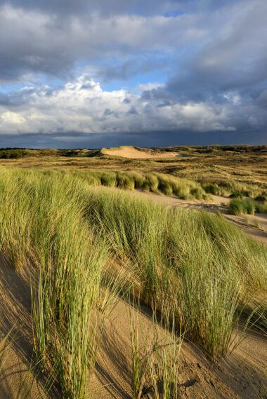 Warm strijklicht schijnt over het zand en helmgras van de duinen in het Noordhollands Duinreservaat bij Heemskerk