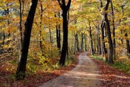 Gevallen bladeren langs slingerend fietspad met aan weerszijden boomstammen van kleurig bos tijdens herfst in de Schoorlse Duinen.