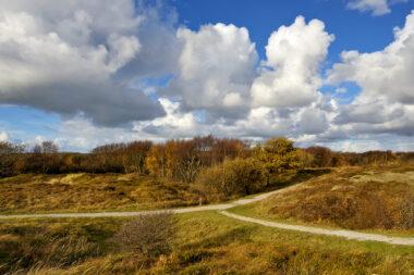 Twee wandelpaden komen samen in een duinlandschap met herfstkleuren in de Pettemerduinen bij Petten.