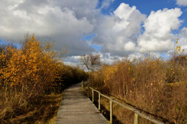 Blauwe lucht en witte wolken boven vlonderpad door berkenbosje in duinmoeras van de Pettermerduinen.