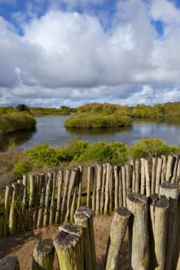 Zicht op het duinmeer 'Meertje van Burdet' vanaf het wisentenuitkijkpunt in het Nationaal Park Zuid-Kennemerland bij Overveen.