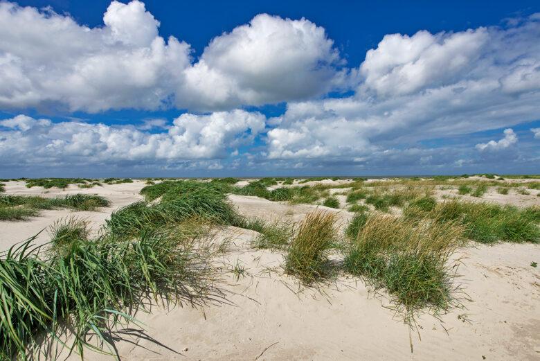 Duinen begroeid met zandhaver in de zeereep van het onbewoonde Waddeneiland Rottumeroog in de Nederlandse Waddenzee.