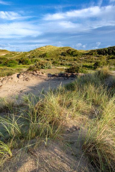 Landschap met zanderige duinhellingen, helmgras en duinstruweel in het natuurgebied Meijendel bij Wassenaar