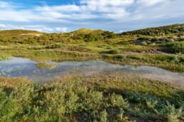 Zicht op natte duinvallei en duinhellingen in het duinlandschap van natuurgebied Meijendel bij Wassenaar.