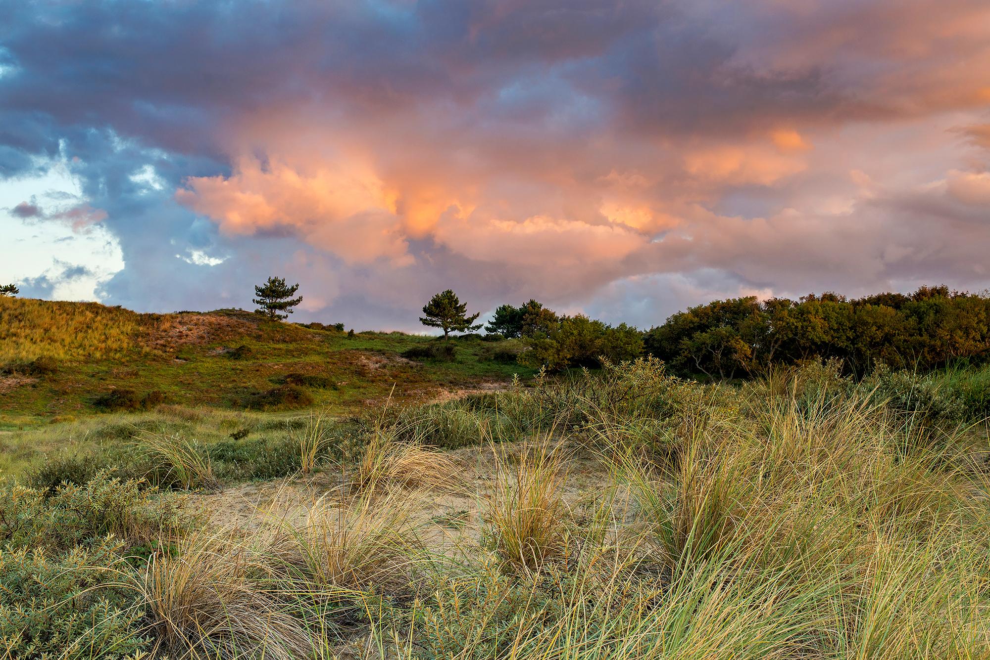Roze wolkenlucht tijdens zonsopkomst in de duinen van het Nationaal Park Zuid-Kennemerland bij Bloemendaal aan Zee.