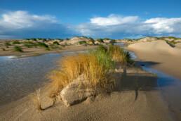 Helmgras op embryonaal duintje langs natte vallei op de strandvlakte van De Hors op waddeneiland Texel.