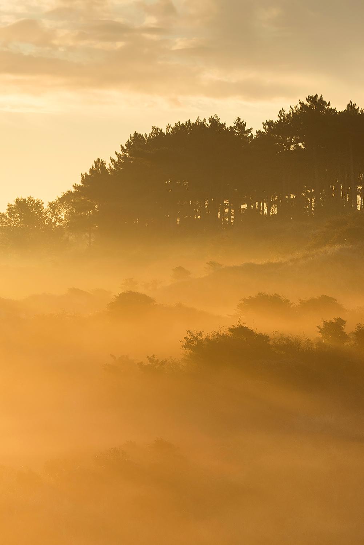 Het eerste zonlicht schijnt door lagen mist tijdens zonsopkomst in de duinen van het Nationaal Park Zuid-Kennemerland bij Bloemendaal aan Zee