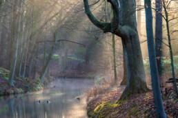 Zonnestralen schijnen door mist over het water van een sloot in het bos van Landgoed Elswout bij Overveen