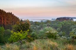 Lagen mist tijdens zonsopkomst in het Nationaal Park Zuid-Kennemerland bij Santpoort-Zuid