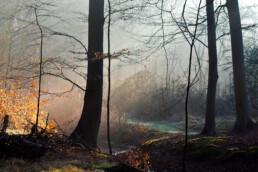 Zonnestralen door mist tijdens zonsopkomst in het bos op Landgoed Vogelenzang