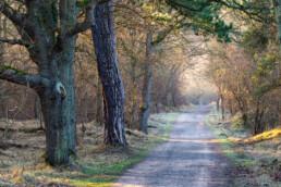 Verlaten weg door het duinbos van het Nationaal Park Zuid-Kennemerland bij Santpoort