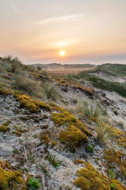 Zonsopkomst in mistig landschap in het Noordhollands Duinreservaat bij Egmond aan Zee